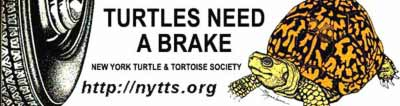 Give Turtles a Brake Bumper Sticker